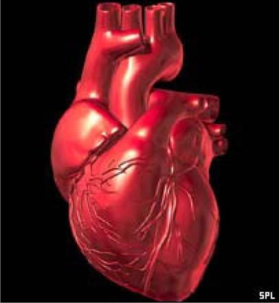 Профилактика сердечно-сосудистых заболеваний и инсульта.