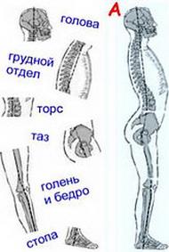 220px-posture